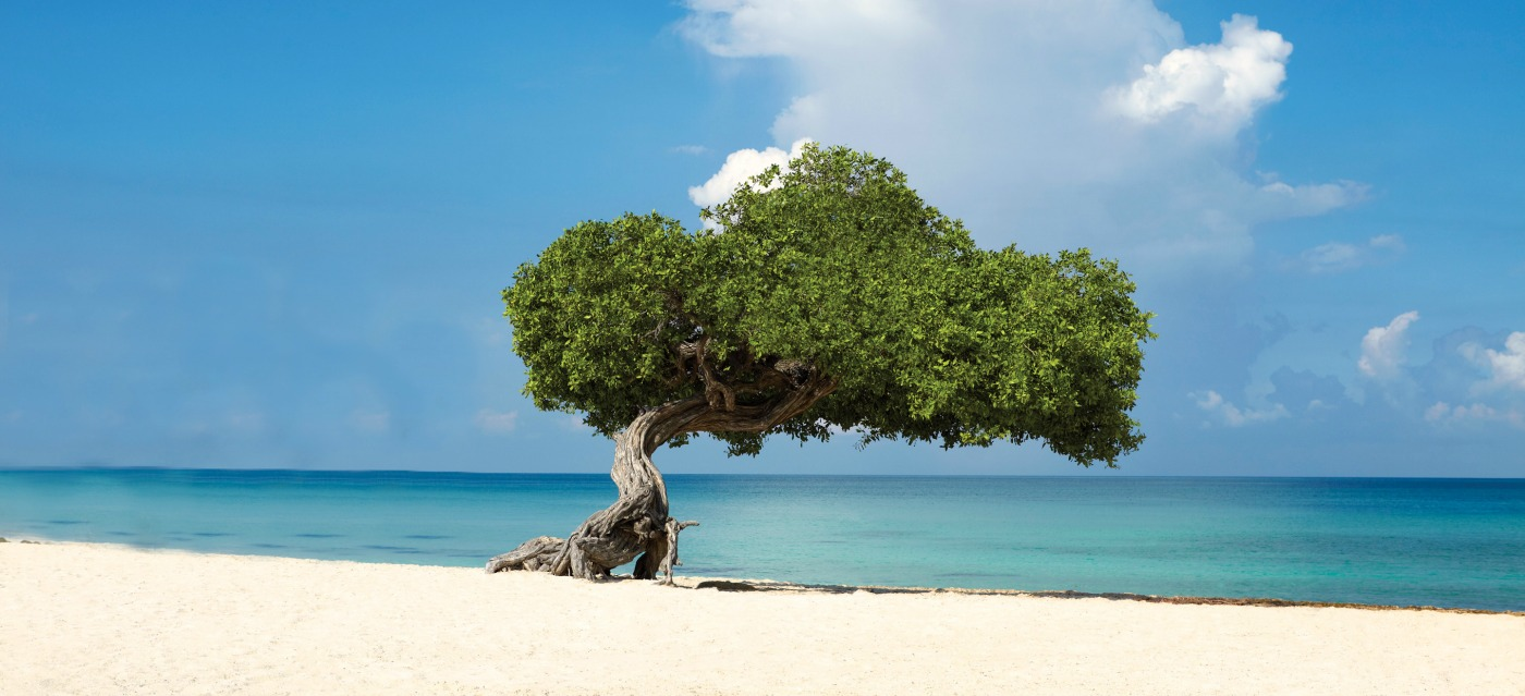 Get to know Aruba
